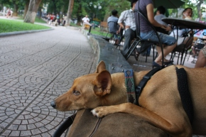 At her favourite spot - Hapro on Hoan Kiem