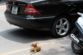 Chihuahua and a Mercedes