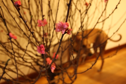 I had to buy a peach blossom branch - Tala investigating
