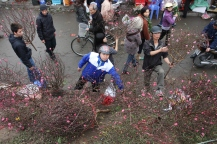 Final peach blossom sales