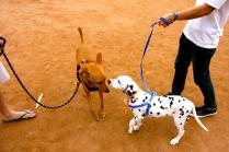 Tala and a Dalamation puppy