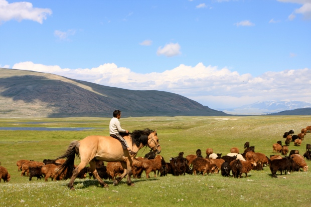 One of the horseman's children herding the family's goats and sheep