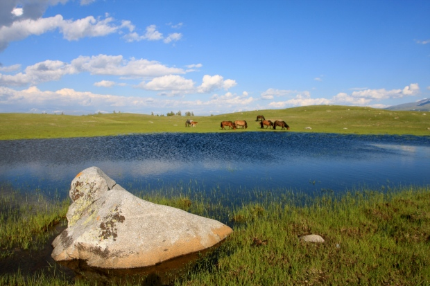 Passing small lakes and herds of horses as we headed back to our ger