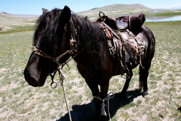 As Mongolians don't name their horses we gave them our own names. This was Fred - the laziest of the bunch.