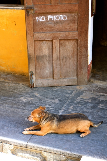 Hoi An - I think the sign referred to the art work not the dog...