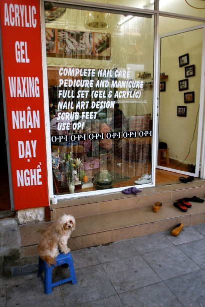 A dog 'waiting' for its pedicure....