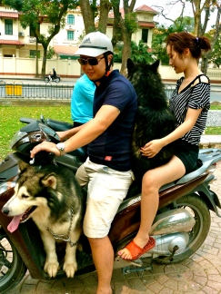 Two malamutes on a motorcyle - only in Vietnam!