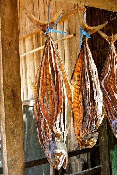 Huge tuna drying