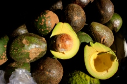 amazing avocados