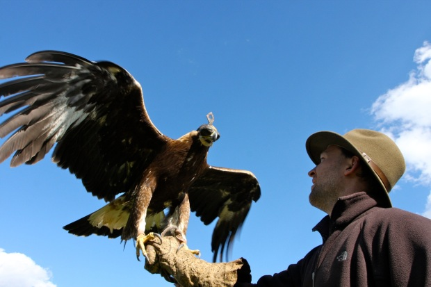 Piers holding a Golden Eagle in Mongolia