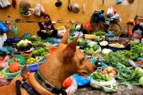Tala surveying the produce
