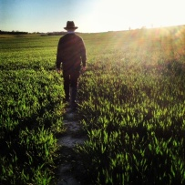 Piers walking through the early wheat fields